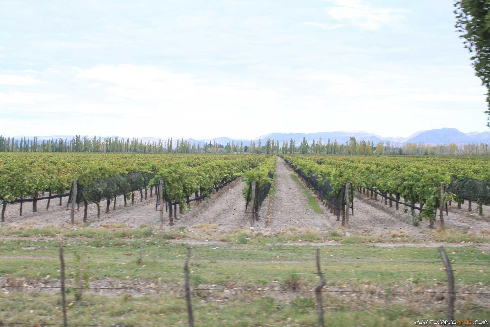 Los Viñedos que rodean San Rafael