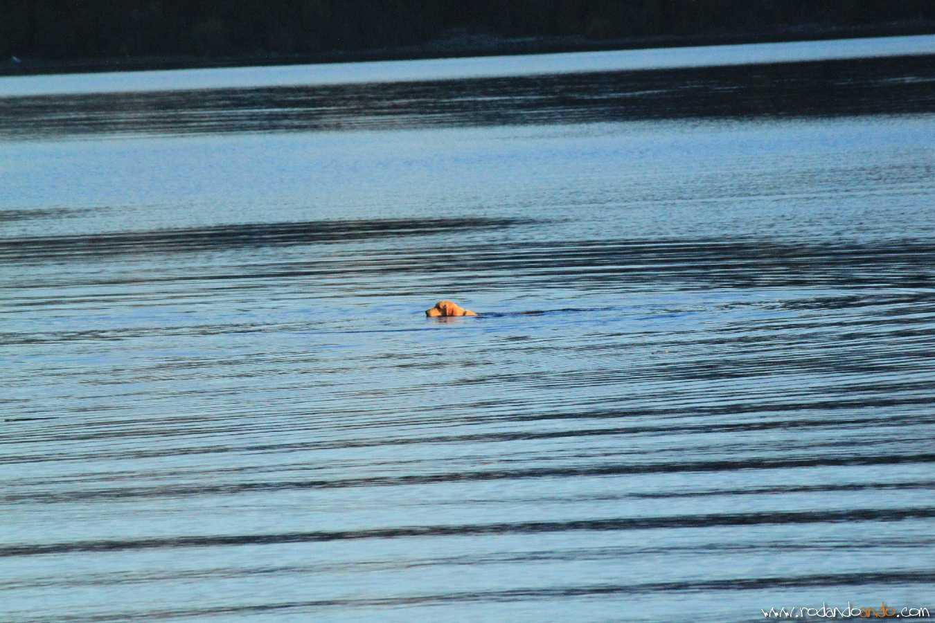 El agua del Nahuel helada y un perro muy valiente